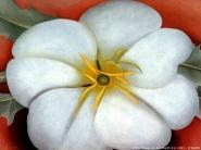 Georgia o' Keeffe, White flower on red earth